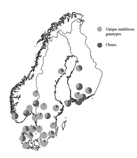 Thesis: How Sexual Reproduction Affects the Population Biology of Phytophthora infestans, Swedish University of Agricultural Sciences Uppsala (2012) | Plants and Microbes | Scoop.it