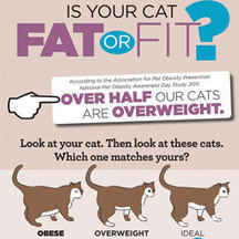 Infographic: Fit Cat or Fat Cat? | Cats' behavior and maintenance. | Scoop.it