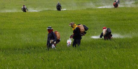 Pesticides : les preuves du danger s'accumulent   Sustainable imagination   Scoop.it