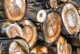 Développement durable – Le recours à l'énergie bois - Le nouvel Economiste | Green Business in France | Scoop.it