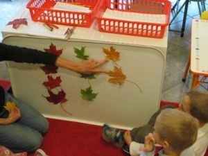 Graphing leaves in preschool | Digital story | Scoop.it
