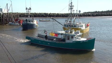 Buoyant lobster industry creates 'unheard of' wait times for fishing boats | Nova Scotia Fishing | Scoop.it