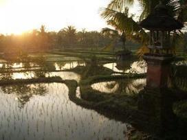 Flood-tolerant rice: The future of agriculture | Plant Breeding and Genomics News | Scoop.it
