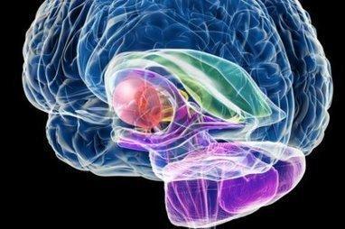 Un antidiabétique stimule la formation des neurones | Seniors | Scoop.it