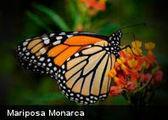 10 curiosidades sobre las mariposas ~ Culturizando | Bichos en Clase | Scoop.it