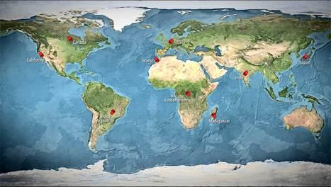 Un monde sans faim - 9 milliards à nourrir en 2050 - L'Esprit Sorcier | Enseigner l'Histoire-Géographie | Scoop.it