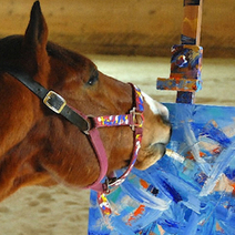 Racehorse's Paintings Compared to Jackson Pollock : DNews   Animals   Scoop.it