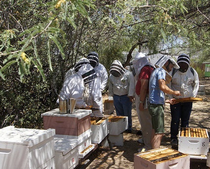 Bees Help Native American Students Learn about Math, Science | USDA Blog | CALS in the News | Scoop.it