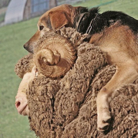 10 Adorable Pictures Of Animals Riding Animals | Strange days indeed... | Scoop.it