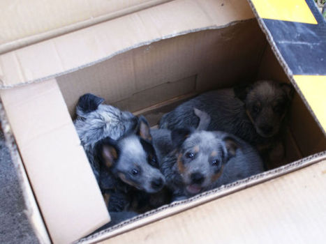 Aseguran boas, aves y perros en El Baratillo | Maltrato animal | Scoop.it