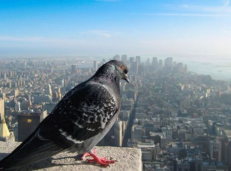 How Our World Would Look If You Were A Bird | A World of Oneness | Scoop.it