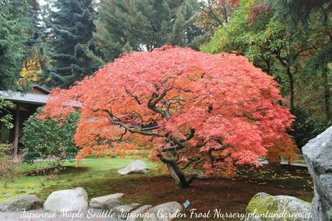 What's Growing On: The Japanese Garden Seattle Washington | What's Growing On | Scoop.it
