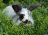 Stolen Rabbits Returned  To Farmer   Strange days indeed...   Scoop.it
