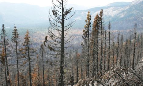 Wildfires push plants to move north - Futurity   La parole de l'arbre   Scoop.it