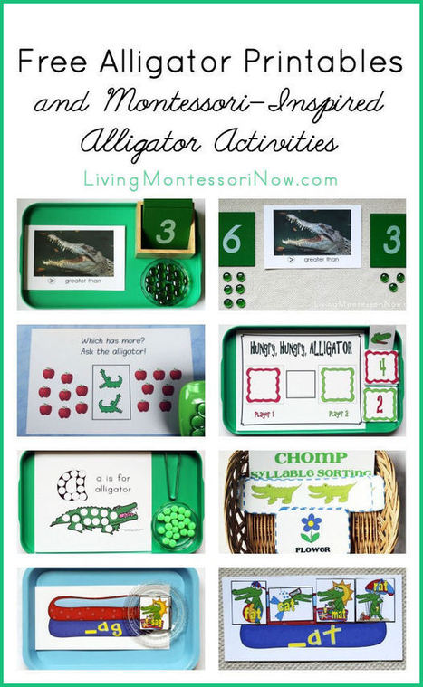 Free Alligator Printables and Montessori-Inspired Alligator Activities | Montessori Inspired | Scoop.it