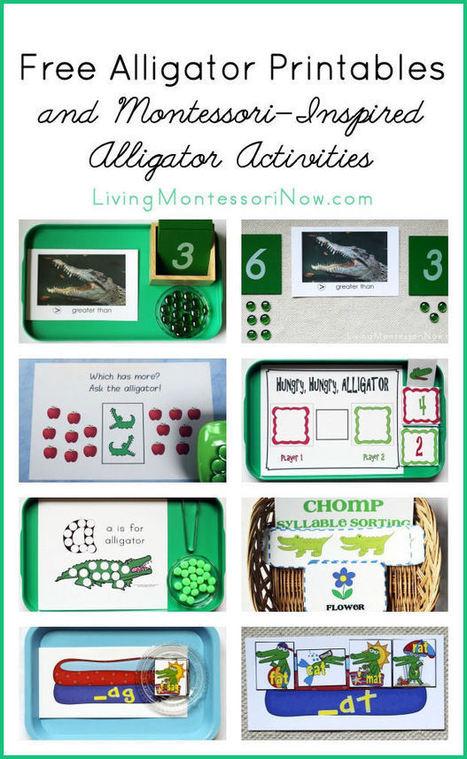 Free Alligator Printables and Montessori-Inspired Alligator Activities | Montessori Inspired | Scoop.it