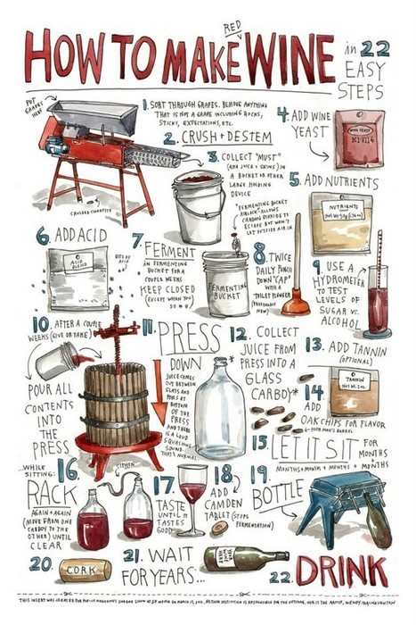Make Your Own Wine at Home [Infographic] | BestInfographics.co | The Best Infographics | Scoop.it