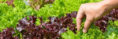 Au Canada, on peut cueillir ses légumes au supermarché | Retail Concept & Digital | Scoop.it