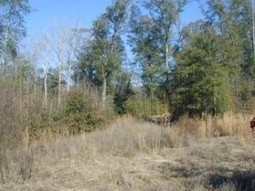 Deer Hunting Lease in Alabama: Locating Paper Company Land | Hunting and Fishing in Alabama | Scoop.it