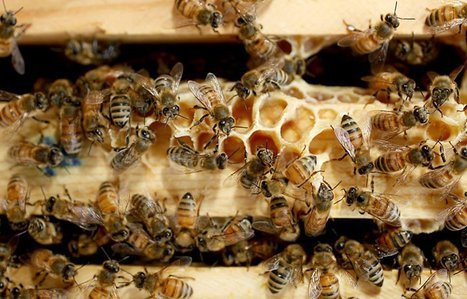 Study: Pesticide used on 'bee-friendly' plants may hurt bees | Sustain Our Earth | Scoop.it