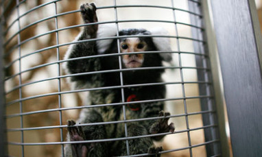 Guilty Government Practices - Global Animal   Animal abuse   Scoop.it