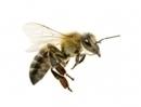 générations-futures » Agissez-pétition: Interdisez les insecticides néonicotinoïdes pour sauver les abeilles | Abeilles, intoxications et informations | Scoop.it