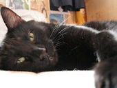 Bunny's Blog: Black Cat Appreciation Day | Pet News | Scoop.it