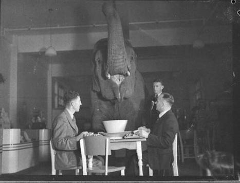 Twitter / HistoryInPics: Elephant's tea party, 1939 ... | Análise do discurso digital | Scoop.it
