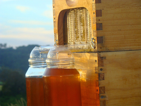 Honey on Tap: A New Beehive that Automatically Extracts Honey without Disturbing Bees | This Gives Me Hope | Scoop.it