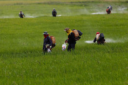 Pesticides : les preuves du danger s'accumulent | Equitable & durable | Scoop.it
