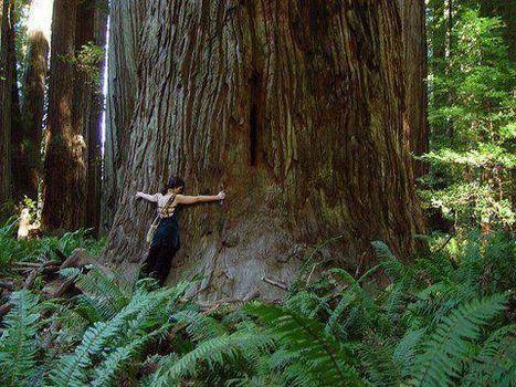 La biodiversité, la seule assurance-vie | Nouveaux paradigmes | Scoop.it