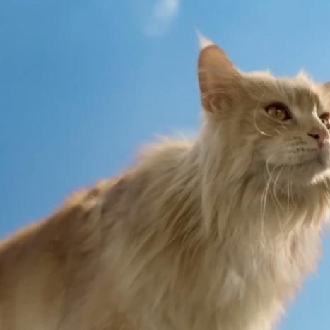 Meet the Internet's Latest Cat Sensation - Mashable | Cats | Scoop.it