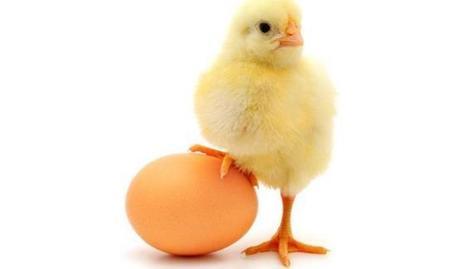 Terpecahkan Misteri - Telur atau Ayam Duluan ada di Bumi? | SITUS AGEN JUDI ONLINE TERBAIK DAN TERPERCAYA INDONESIA | Scoop.it