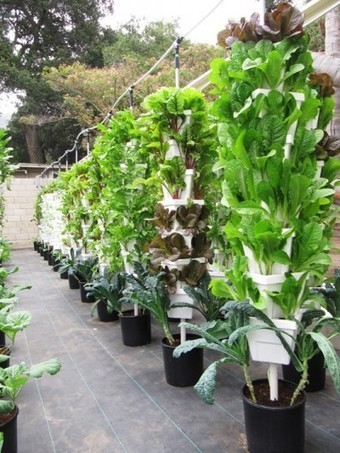 The Latest Farm-to-Table-Trend – Westphoria | A blog by Sunset | Wellington Aquaponics | Scoop.it