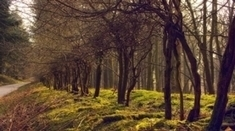 World's Forests Have Fragmented into Tiny Patches | Sustain Our Earth | Scoop.it