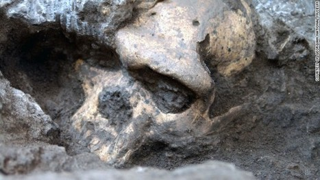 Rare skull sparks human evolution controversy | Controversies for Discussion in Conversation Class | Scoop.it