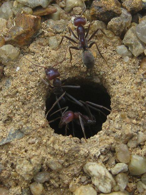 Des nouvelles des insectes : Les dangers de la surchauffe | EntomoNews | Scoop.it