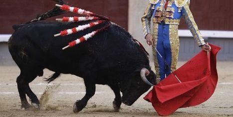 Polémique autour de la viande de taureau fournie à la banque alimentaire du Vaucluse | Actualité de l'Industrie Agroalimentaire | agro-media.fr | Scoop.it