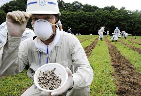 [Eng] Les graines de tournesol semées à Fukushima pour dénucléariser le terrain   The Japan Times Online   Méli-mélo de Melodie68   Scoop.it