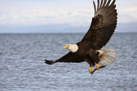 Leadership: Leadership lessons from Eagles ! | Leadership Mantra | Scoop.it