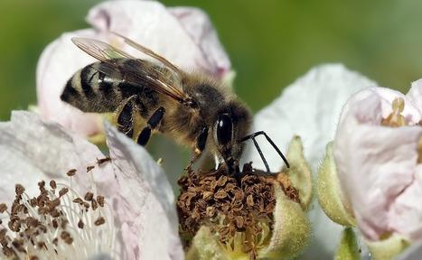 Biodiversité: la loi à l'épreuve des lobbies | EntomoScience | Scoop.it