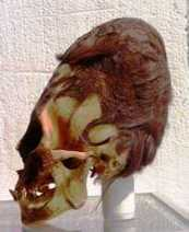 DNA Results For The Nephilim Skulls In Peru Are In And The Results Are Absolutely Shocking | Biologia 2014 | Scoop.it