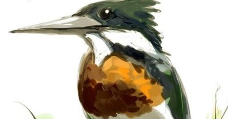 Bird of the Day: Amazon Kingfisher   Birding in the news   Scoop.it