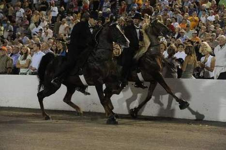 Tennessee Walking Horse industry leader calls for end to 'black cloud' of soring | Horse and Rider Awareness | Scoop.it