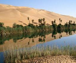 High salt levels in Saharan groundwater endanger oases farming | Sustain Our Earth | Scoop.it