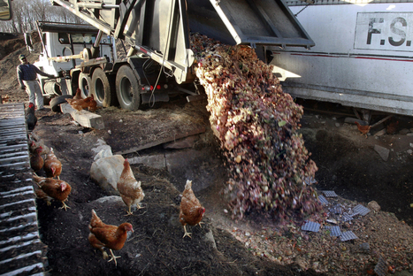 Alternative energy? Garbage trashes solar | Greening the Earth | Scoop.it