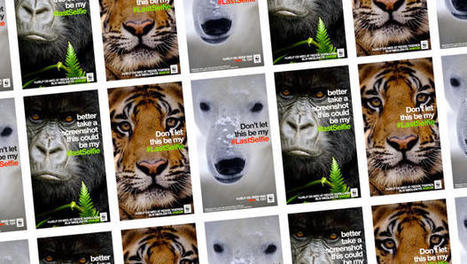 """World Wildlife Fund Uses Snapchat To Warn Of Endangered Animals' """"Last Selfies"""" 