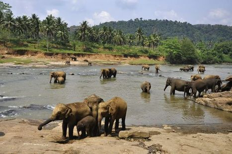 Sri Lanka in Style – A Holiday to Remember Forever, and Ever | bunpeiris | Scoop.it