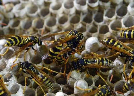 Trusted East Modesto Walk in Clinic: Campers, Beware of Pesky Wasps | USHealthWorks ModestoII | Scoop.it