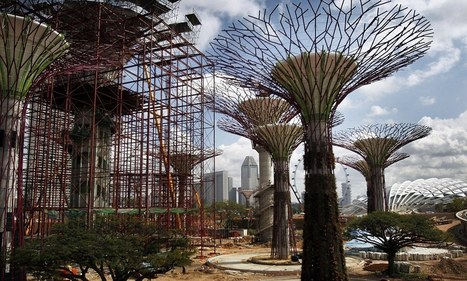 The supertrees of Singapore made of steel and concrete will create botanical garden in the sky | Architecture | Scoop.it